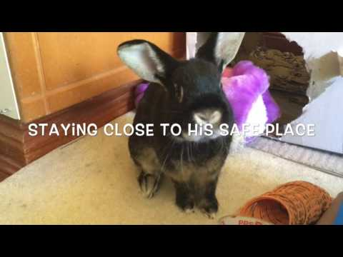 Dealing With An Aggressive Rabbit