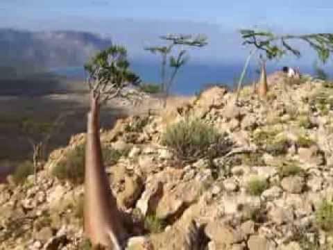 How To Get To Socotra Island