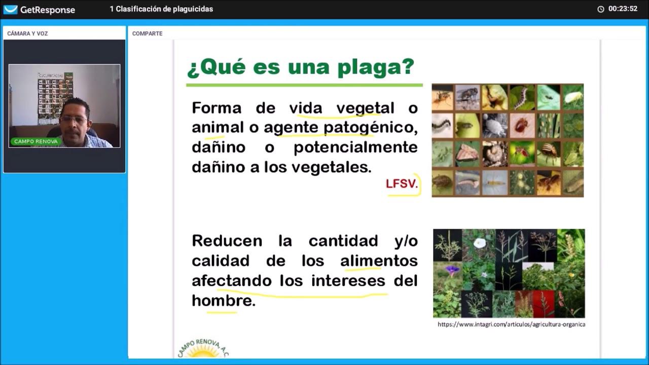 Download 1  BUMA  Clasificación de plaguicidas CR