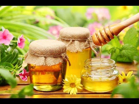 Каталог меда. Опасные и полезные свойства меда