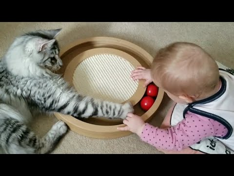 Maine Coon Kitten and Baby play together with Balls Game, Toddler laughs a lot about the playful Cat