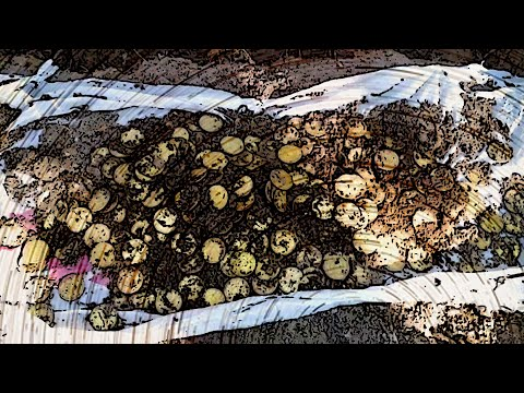 #КЛАД В ЛЕСУ 2016! ШОК ОТ НАХОДОК! #THE TREASURE IN THE FOREST 2016! THE SHOCK OF FINDS!
