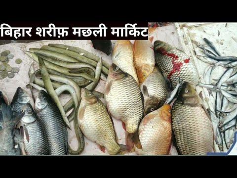 Bihari sharif Machhali Market 2019
