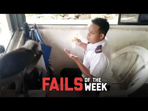 Monkeys Do Weird Things – Fails of the Week | FailArmy