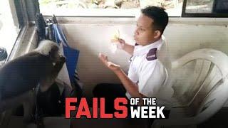 Monkeys Do Weird Things - Fails of the Week | FailArmy