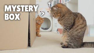 Cats vs Mystery Box