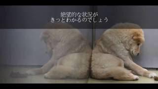 日本では毎年十数万匹の犬や猫が動物愛護センターへ送られ、そして殺処...