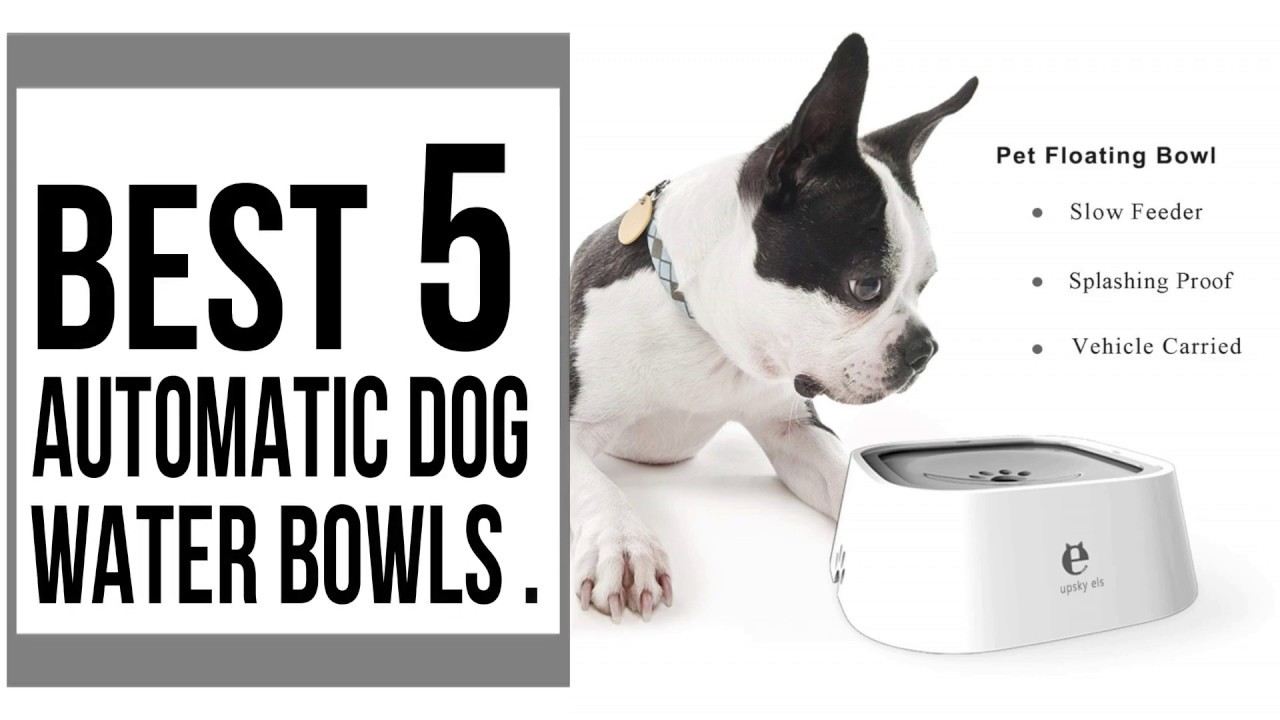 Automatic Dog Water Bowl | Best Water Bowl For Dog 2019