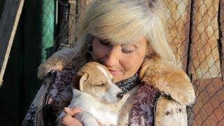 4 лапы надежды | Приют для бездомных животных