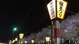 日本一周女ひとり旅270日目。宮城県大河原町の白石川堤千本桜の夜桜と祭りLive