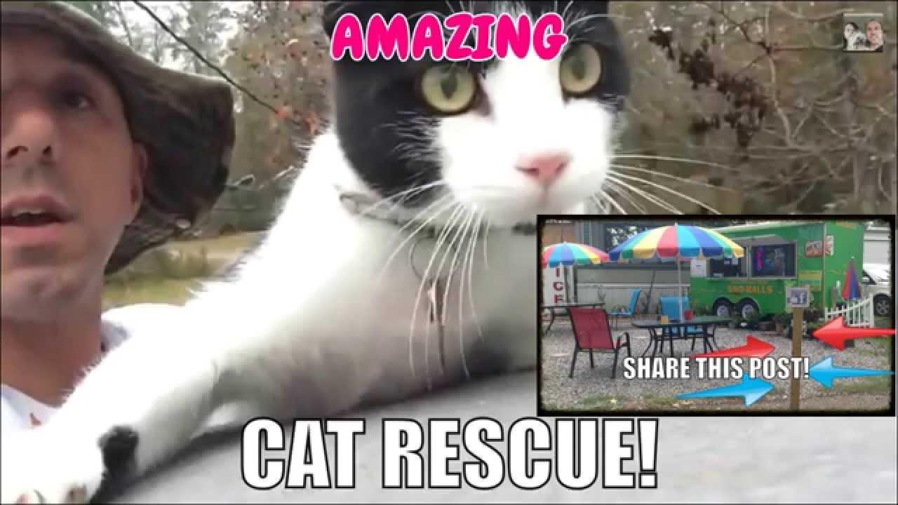 Spell Family Snoballs Feral Cat Rescue in Louisiana
