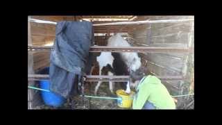22-02-15 Ponette et bébé Jour 2