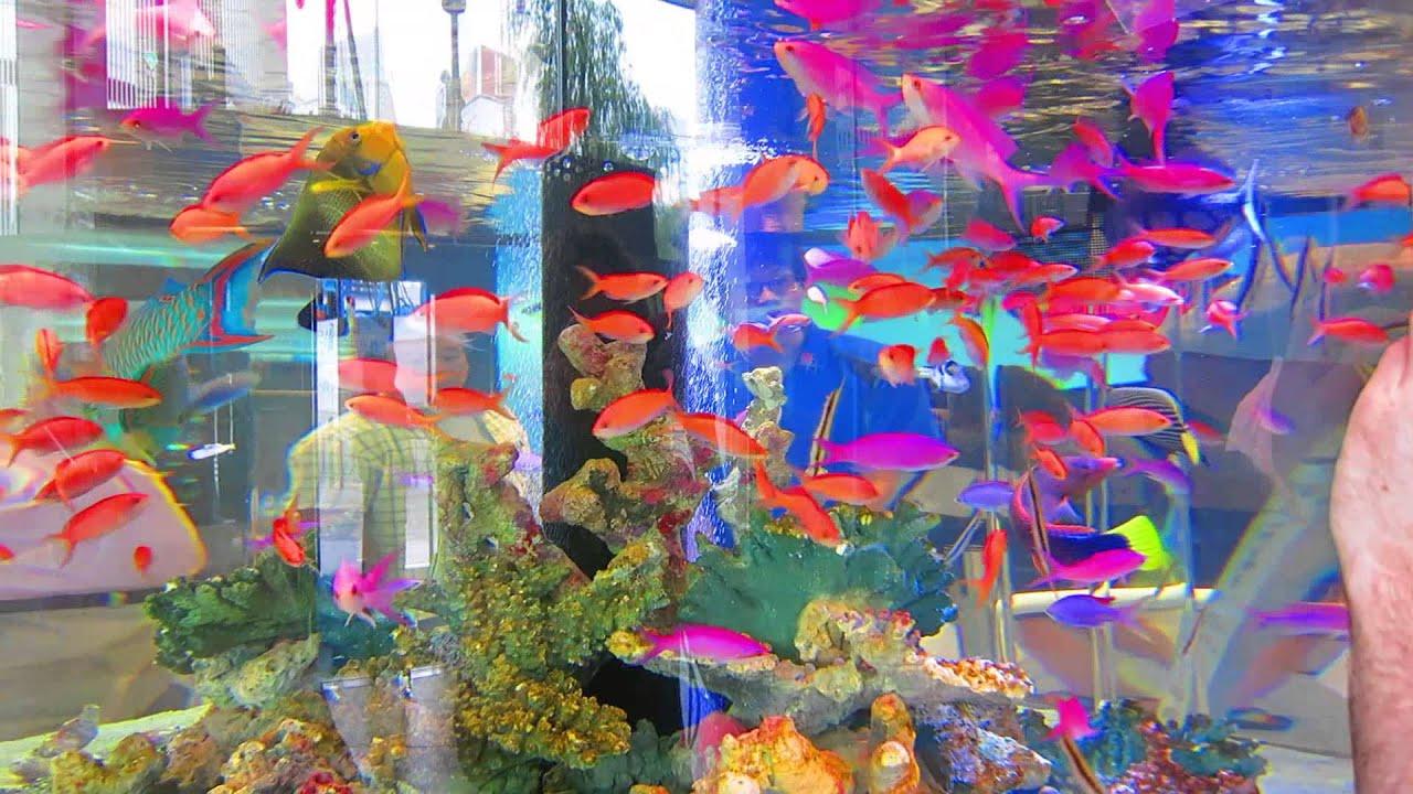 Fish aquarium japan - Sony Centre Aquarium Tokyo Japan July 2013 2 Colourful Fish Tank Youtube