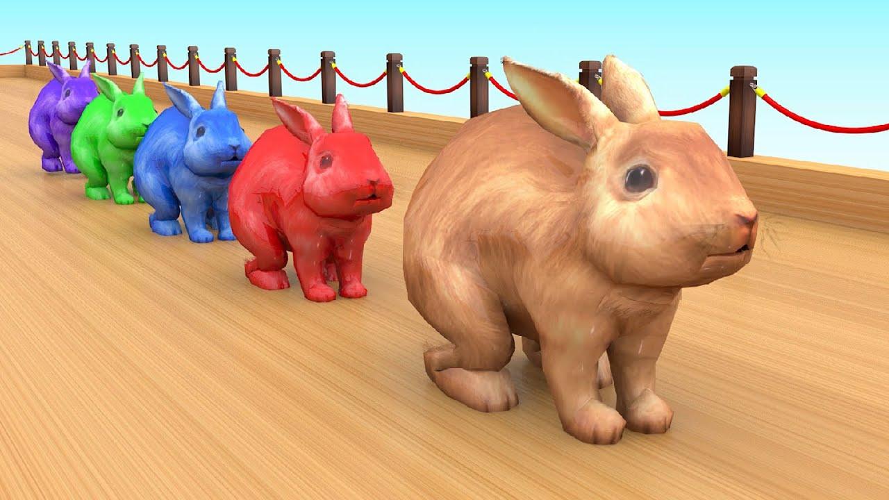 Belajar warna dengan binatang lucu | Belajar Mengenal Hewan Hewan Peternakan Untuk Anak-Anak # 3