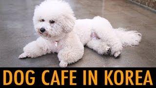 Dog Cafe in Korea (KWOW #149)