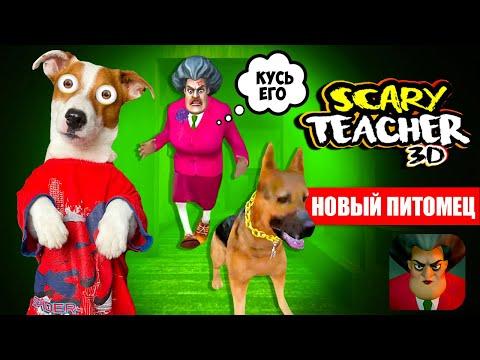 МИСС ТИ купила Собаку 🔴 Злая училка (Scary Teacher 3D) - новые Пранки