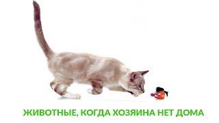 Животные, когда хозяина нет дома. Ветеринарная клиника Био-Вет.