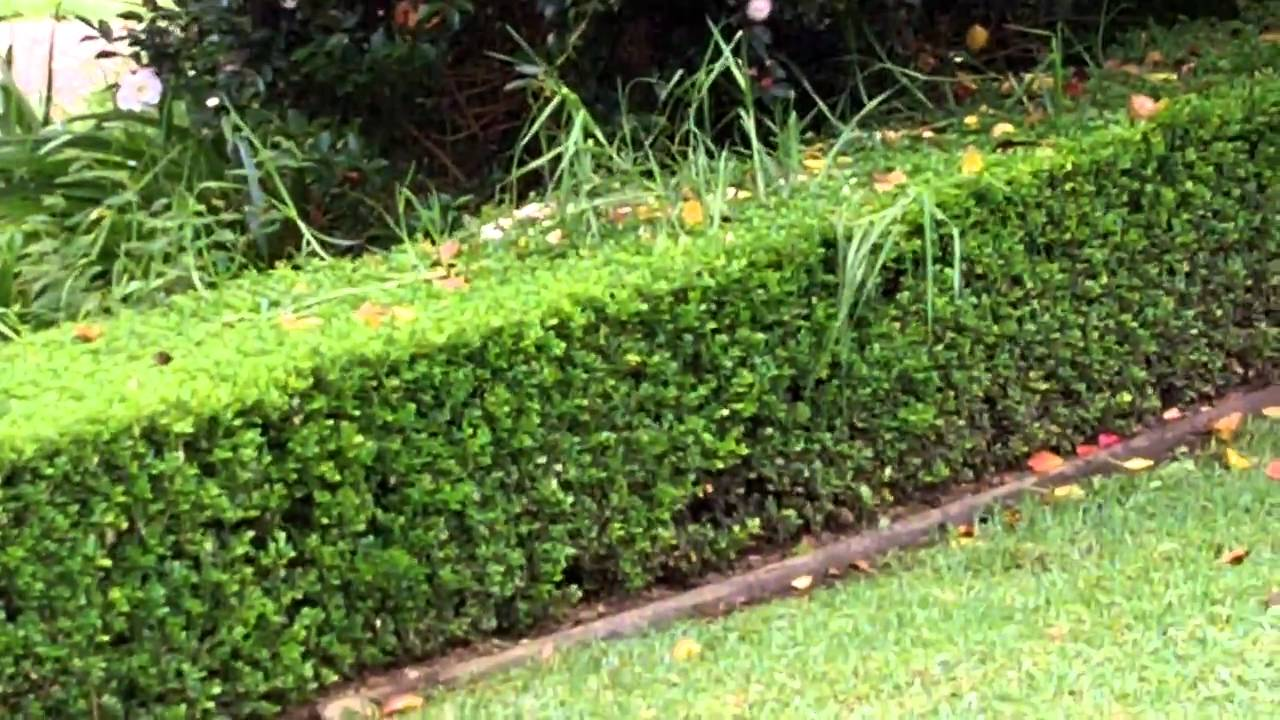How To Get Rid Of Grass In Garden Hedges And Other Garden Plants