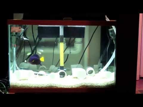 Quarantine Tank with Easy Maintenance