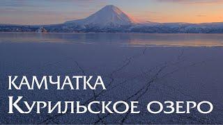 Камчатка. Курильское озеро. Мир дикой природы. Медведи и нерка. Kamchatka. Kuril Lake.