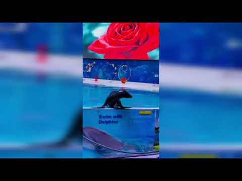 Dolphin&Seal Show in Dubai|Dubai Dolphinarium|Watch Full video Visit Channel Ala AbuDhabi Lo#Shorts