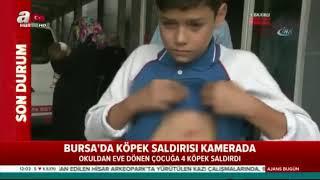 Bursa'da köpek saldırısı kamerada!
