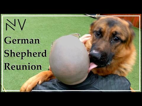 German Shepherd/Owner Reunited   NerdVlog