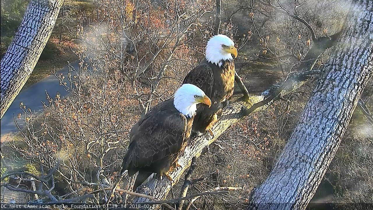 National Arboretum Bald Eagle Nest Cam