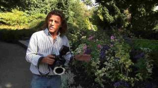 Close-up Photography with Ring Flash