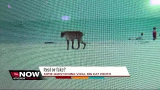 Photo of big cat on Florida beach has the internet questioning if it's real