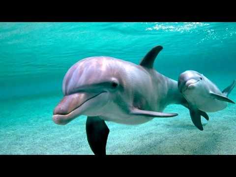 Как киты кормят своих детенышей молоком видео
