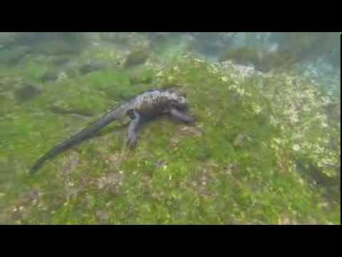 Beautiful Galapagos Wildlife