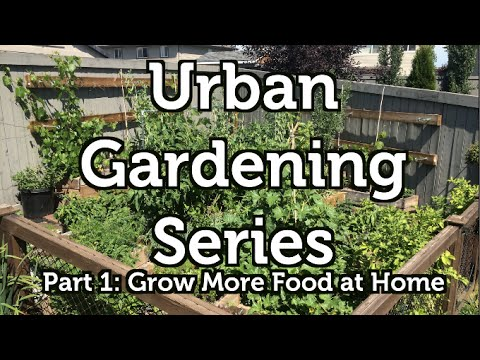 Grow More Food At Home: The Urban Gardening Series Part 1   YouTube