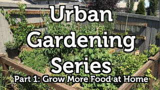 Grow More Food at Home: The Urban Gardening Series Part 1
