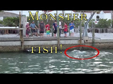 Hugh Monster Fish! Catch Off Dock Fishing huge Florida Goliath Grouper The Boat Life Adventure Vlog