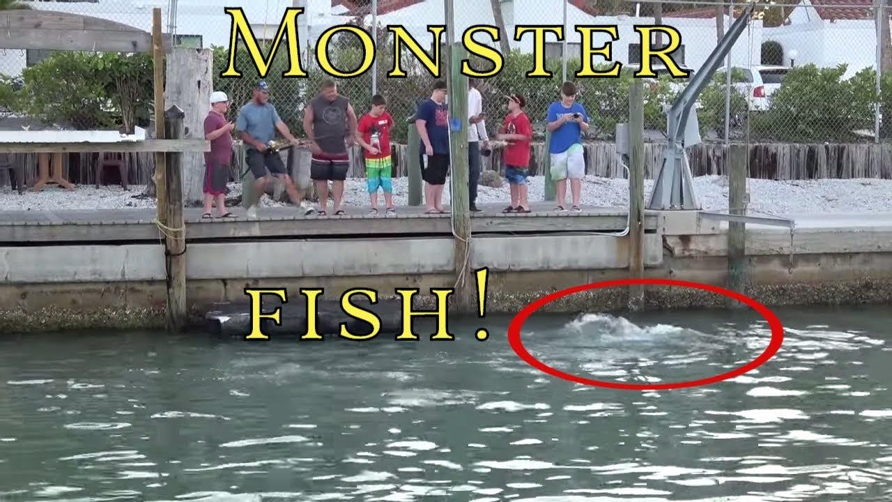 Download 201 Monster Fish! Catch Off Dock Fishing huge Florida Goliath Grouper The Boat Life Adventure Vlog