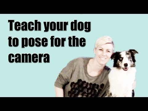 Teach your dog to pose for the camera on cue - dog training clicker