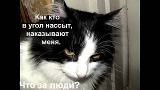 Кот умнее меня.