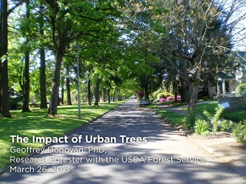 Municipal EAB Management Series: The Impact of Urban Trees