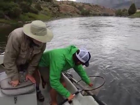 Fly Fishing on Yellowstone River