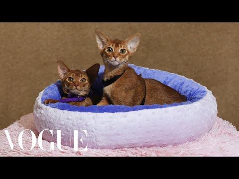 141st Westminster Kennel Club Dog Show | Vogue