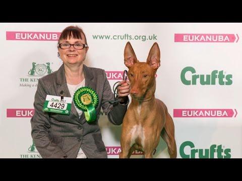 Crufts 2017 | Best of Breed winner Christine Dawson and pharaoh hound Ollie
