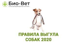 Правила Выгула Собак 2019 & Где Можно И Нельзя Выгуливать Собаку. Ветклиника Био-Вет