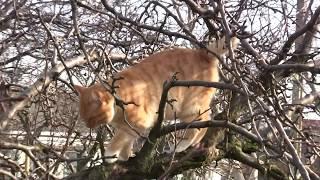 Любимец нашего двора-рыжий кот ЁЛДАШ.Солнечный защитник