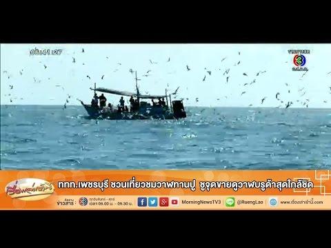 เรื่องเล่าเช้านี้ ททท.เพชรบุรี ชวนเที่ยวชมวาฬทานปู ชูจุดขายดูวาฬบรูด้าสุดใกล้ชิด (12 พ.ย.57)
