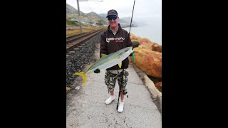 Shore Based Spinning for Yellowtail (Kingfish) in Cape Town, South Africa