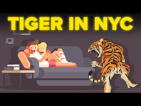 Living with a Tiger: Man Keeping A 400lb Killer In His Tiny New York Apartment