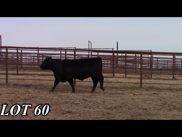 Mead Angus Farms Lot 60