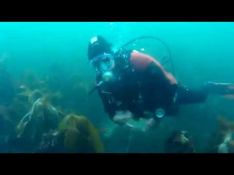 Dunbar harbour dive 10-09-18