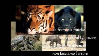 Watch Franco Fasano Da Fratello A Fratello video